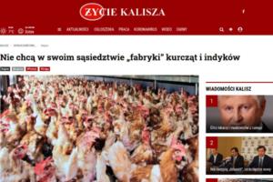 Życie kalisza - kurczaki