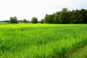 Graniczki chroniony krajobraz